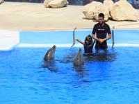 Nuoto con i delfini al Parco Marino di Malta