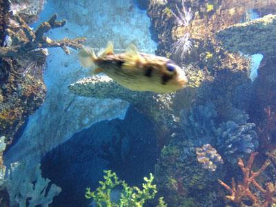 Malta National Aquarium Related Keywords & Suggestions - Malta ...