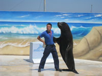 Sea lion shows in Malta